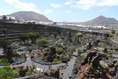 jardin de cactus 11