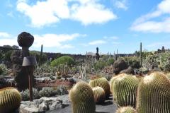 jardin de cactus 3