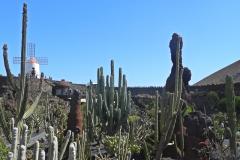 jardin de cactus 4