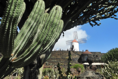 jardin de cactus 5