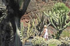 jardin de cactus 6