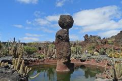 jardin de cactus 8