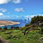 Comienza el proyecto experimental de restauración de hábitats en las cumbres de Famara