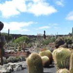 La verdad de divagar por el Jardín de Cactus