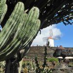 [Galería] La verdad de pasear por el Jardín de Cactus