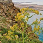 'Tapiz de vocablos', un diccionario que vincula la naturaleza con la humanidad desde Lanzarote